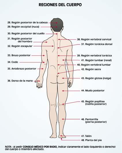 Sistemas fundamentales del ser humano